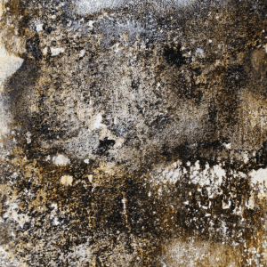 ProActive Environmental Corp. Mold Growth Pic